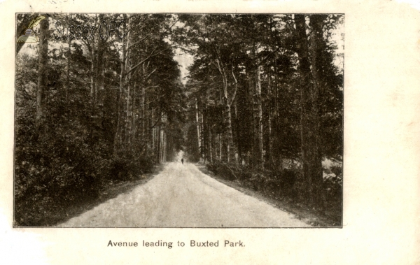Buxted - Avenue leading to Buxted Park