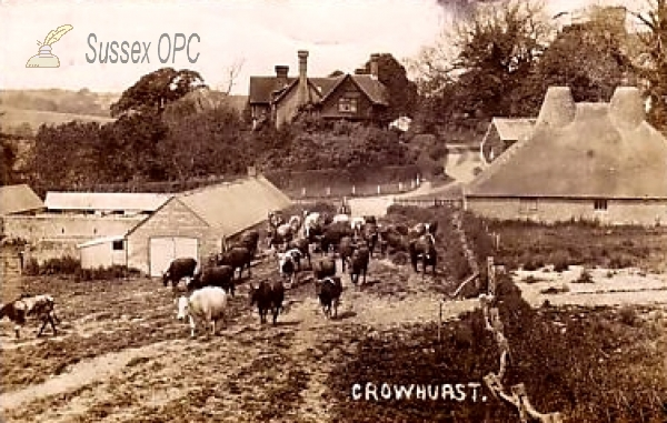 Image of Crowhurst - A farmyard scene