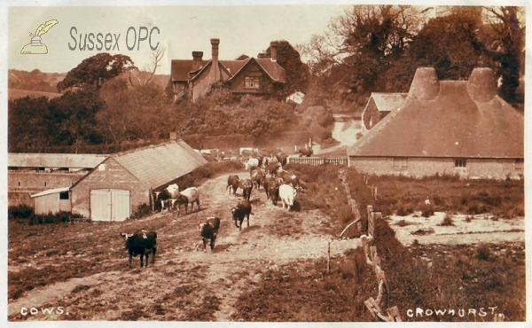 Image of Crowhurst - Farmyard Scene