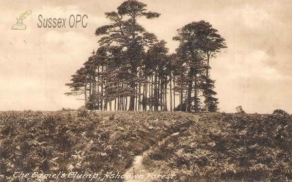 Image of Ashdown Forest - Camels Clump