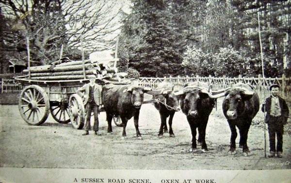 Cross in Hand - Sussex Oxen at Work