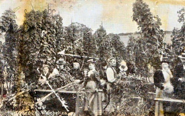 Winchelsea - People working in Hop Garden