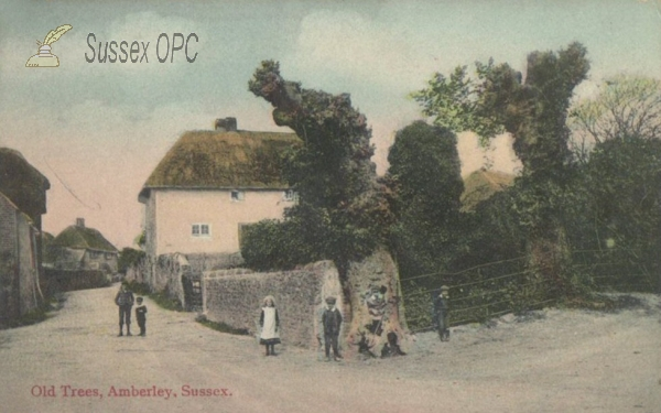 Image of Amberley - Old Trees