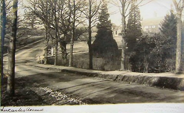 Haywards Heath - Lucastes Avenue
