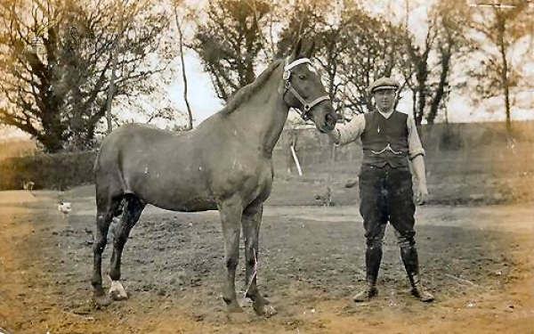Storrington - Horse called Tiger with Groom