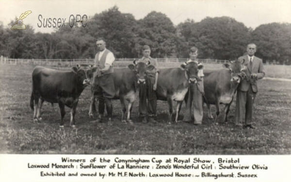 Image of Loxwood - Prize winning cows (Mr M F North, Loxwood House)